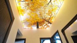 سقف کاذب سه بعدی